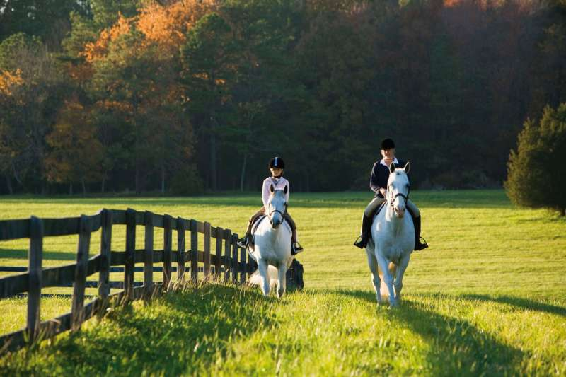 Horse and saddle: Beim Reiten Englisch lernen